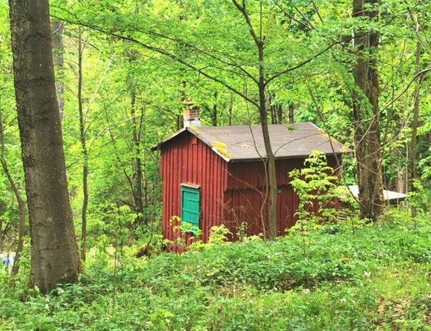 Versteckte Waldhütte
